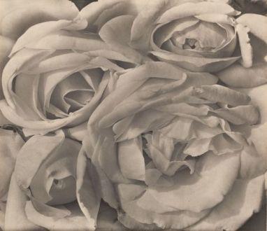 Roses - Tina Modotti
