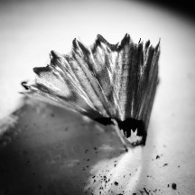 Pencil Shavings 13