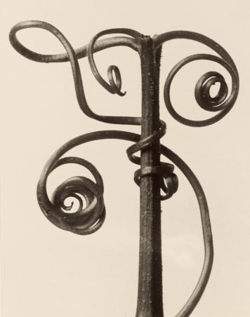 Blossfeldt Cucurbita, 1928
