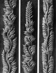 Karl Blossfeldt Beckmannia Cruciformis - 1942